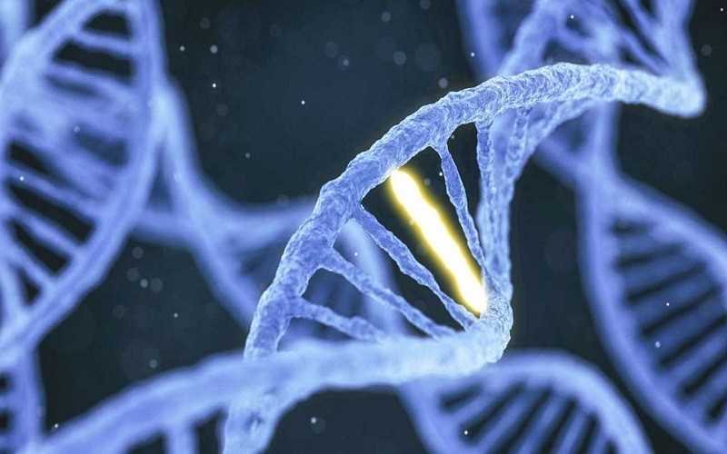 DNA دستوری برای زندگی