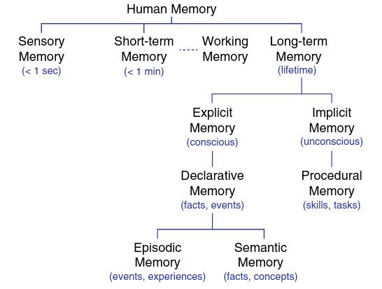 انواع حافظه انسان