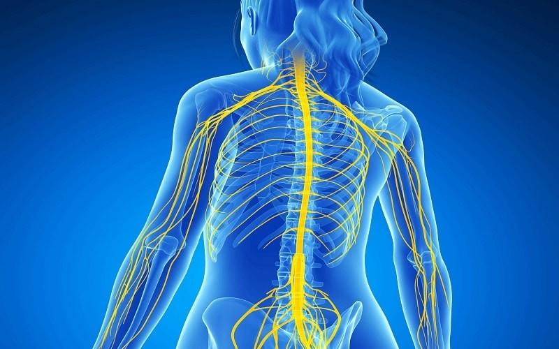 دستگاه عصبی محیطی مسیر ارتباطی بین سیستم عصبی مرکزی، محیط داخلی و خارجی بدن تلقی میشود