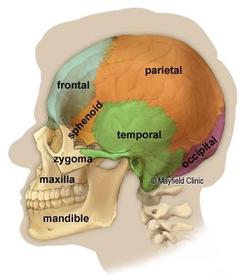 جمجمه از مغز انسان حفاظت میکند