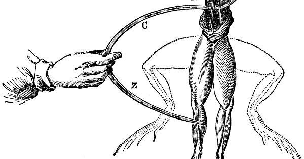 نمایش گرافیکی آزمایش گالوانی: پاهای قورباغه هنگام تماس با یک جفت الکترود (شامل دو فلز مس و روی) منقبض میشود