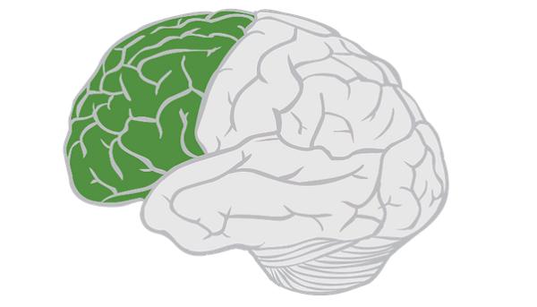 لوب پیشانس مغز انسان