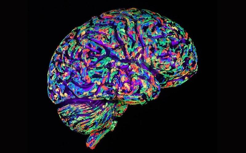 کتاب دانش مغز یکی از منابع مسابقه دانش مغز است