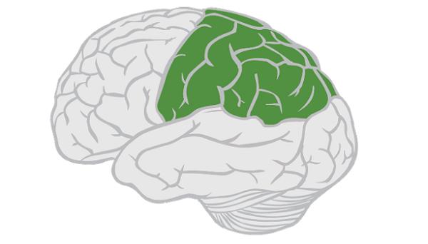 لوب آهیانهای مغز