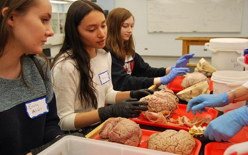 مرحله اول مسابقه دانش مغز 2019 در آذرماه برگزار خواهد شد
