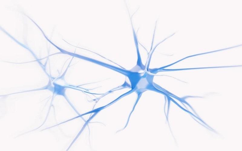 دانشمندان علوم اعصاب یافته های بسیاری راجع به مغز و سیستم عصبی داشته اند
