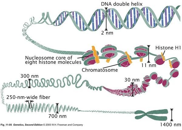 به تمامی ژن های موجود روی DNA ژنوم میگویند