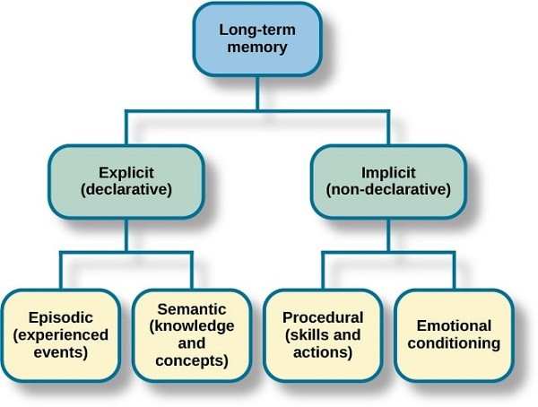 حافظه بلند مدت، مربوط به خاطرات و اطلاعات ورودی قدیمی میشود