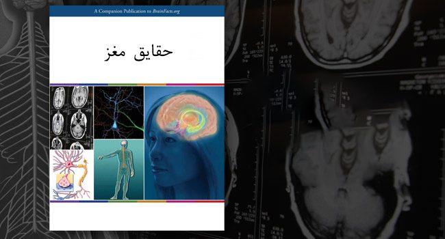 دانلود ترجمه فارسی کتاب حقایق مغز