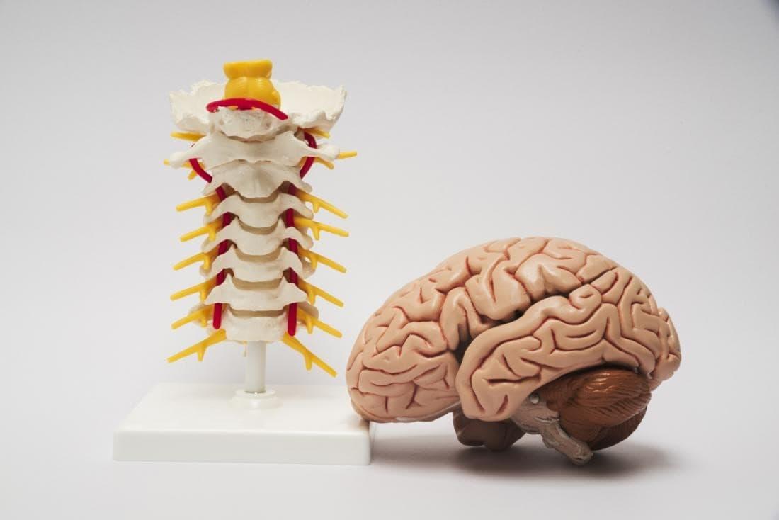سیستم عصبی مرکزی شامل مغز و نخاع است