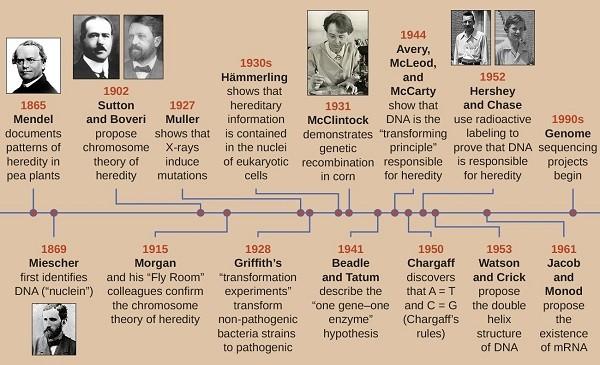 تاریخچهی کشف DNA