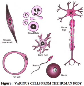 اجزای تشکیل دهنده ی سلول