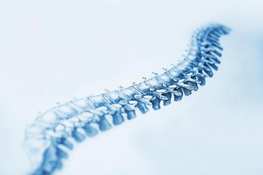 دستورات اولیه ی صادر شده از مغز به ستون فقرات و نخاع منتقل میشود