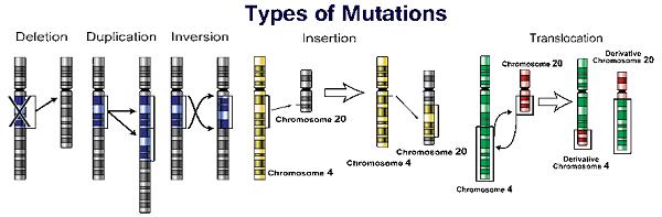 جهش ژنی به معنی اختلال در سنتز پروتئین است