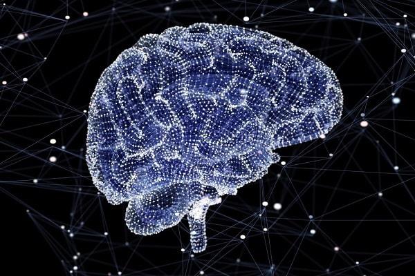 پژوهشها نشان داده که شایعهی استفادهی انسان تنها از 10 درصد مغز خود، رد شده است