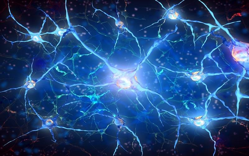 نورون ها ی مغز انسان