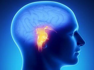 ساقه مغز؛ تنفس، حرکت چشم، حرکت صورت، ضربان قلب و فشار خون را کنترل می کند.